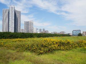 odszkodowanie za zmianę planu zagospodarowania przestrzennego